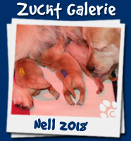 Galerie Wurf Nell 2018